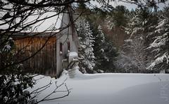 Snowstorm 12.2 - 12.3 2019 (koperajoe) Tags: woodland barn westernmassachusetts snowstorm pasture evergreen farmstead rural newengland snow