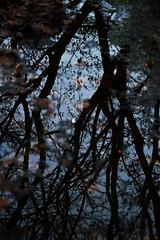 009 (onesecbeforethedub) Tags: vilem flusser technical images onesecbeforetheend onesecbeforethedub onesecaftertheend photoshop exposure contemporaryart streamofconsciousness vassilis galanos oslo norway winter spooky eerie uncanny melancholy melancholic tree trees leaves cold