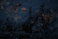 006 (onesecbeforethedub) Tags: vilem flusser technical images onesecbeforetheend onesecbeforethedub onesecaftertheend photoshop exposure contemporaryart streamofconsciousness vassilis galanos oslo norway winter spooky eerie uncanny melancholy melancholic tree trees leaves cold
