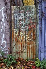 Purple Grapes- Garage Series (Doris Burfind) Tags: garage alley laneway toronto door paint graffiti city urban downtown urbex