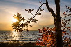 Lake Erie Sunset (Neil Cornwall) Tags: 2019 canada lakeerie october ontario pointpelee fall sunset