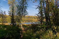 Treat Yourself to a Relaxing Day Out in Nature (thor_mark ) Tags: alaska2019 azimuth81 blueskies bluesskieswithclouds day5 dxophotolab3edited evergreentrees evergreens hillsideoftrees imagecapturewitharsenal lake landscape lookingeast nature nikond800e outside partlycloudy project365 rollinghillsides sunny talkeetnalaketrail talkeetnalakes talkeetnalakespark talkeetnamountains talltrees talltreesallaround trees witharsenal talkeetna alaska unitedstates