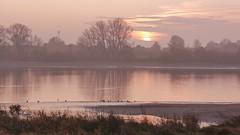 Novembermorgen an der Elbe (sabine1955) Tags: elbe river flus november nebel sunrire sonnenaufgang bäumetreeshimmelskywolken clouds outdoor natur