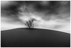 Solitude (bit ramone) Tags: solitude soledad blancoynegro blankandwhite sand areba desert desierto bitramone