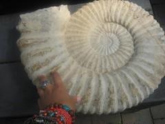 fossil ~ ammonite (australia) (belight7) Tags: old photo oz hand melbourne