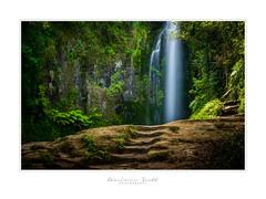 Steps to Paradise... (Dominic Scott Photography) Tags: dominicscott newzealand northisland bayofplenty kaiate falls waterfall waterfalls tepuke sony ilce7rm3 sel2470gm gmaster leefilters leeirnd breathtakinglandscapes