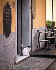 Autumn Serendipity III (Nobusuma) Tags: nikon nikond610 nikkor50mmf18g 50mm f18g digital fall autumn italia italy toscana tuscany ニコン イタリア トスカーナ 秋 cat restaurant 猫 レストラン castagnetocarducci