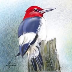 Red-headed woodpecker (Z0409) #bird #birding #fåglar #nature #birds #ig_birds #animalelite #painter #artwork #artofinstagram #birdfreaks #nuts_about_birds #birdart #sketch #illustrationartist #sketching #instagood #worldofartists #art_empire #art_spotligh (ArtMagenta) Tags: birds birding birdwatching birdpainting