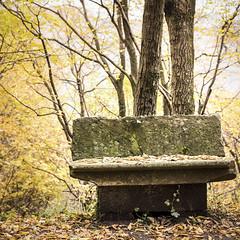Autumn Serendipity II (Nobusuma) Tags: autumn italy fall leaves digital bench 50mm nikon italia tuscany toscana nikkor50mmf18g f18g nikond610 秋 appenninotoscoemiliano イタリア ベンチ ニコン 寂しい トスカーナ アペニン山脈