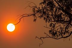 The Sun and the Sydney Fires (Alex E. Proimos) Tags: sydney bushfires bush fire smoking smoke haze pollution asthma flight red sun gum trees eucalyptus