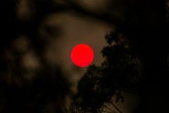 The Ruby Red Sun (Alex E. Proimos) Tags: sydney bushfires bush fire smoking smoke haze pollution asthma flight red sun big ciricle trees the ruby eucalyptus