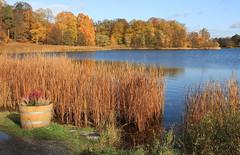 Hagapark in Autum (Wild Chroma) Tags: hagapark autumn sweden stockholm