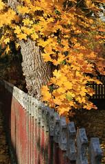 Hagalund in Autumn (Wild Chroma) Tags: sweden autumn