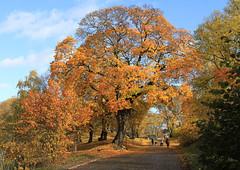 Hagapark in Autumn (Wild Chroma) Tags: autumn sweden trees hagapark