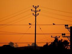 """Follow your soul it knows the way..."" (fl_mala) Tags: sunrise beautifulcolours greatmoment lifeisbetterontheisland parosisland paros greece ilovegreece greekislands greecelovers discovergreece traveltogreece birds wonderfulworld"