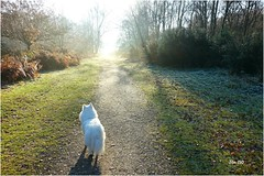 Magical frosty morning (Explored - thank you !) (Jan 130) Tags: jan130 december2019 frost sun sunrays sunshine hoarfrost marnie dog wonderment wondrous light beautiful overjoyed happy suttonpark suttoncoldfield englanduk topazstudio