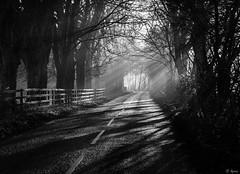 The Avenue III (Hector Patrick) Tags: autumn yorkshire northyorkshire rosedale dng rosedaleabbey flickrelite britnatparks pentaxk1 pentaxdfa28105mmeddcwr lightroomclassic light sunlight flickr trees fence pentax