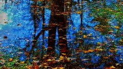 Autumn Reflections (Bob's Digital Eye 2) Tags: bobsdigitaleye2 abstract autumnleaves autumn flicker flickr reflections