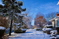 """Let it snow! (ineedathis, Everyday I get up, it's a great day!) Tags: autumn trees house snow landscape azaleas lawn powerlines japanesemaple sycamore frontyard bushes bluespruce nikond750 """"bluesky"""""""