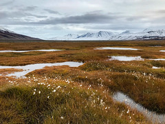 Tundra meadows (cezary.morga) Tags: landscape nature svalbard spitsbergen arctic mountains snow meadow tundra outdoors travel clouds sky