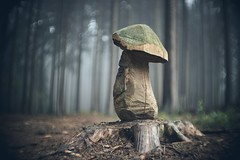 Tree art (Janette Paltian) Tags: janettepaltian sony 7m3 7iii meopta meostigmat 50mm projection bokeh dof forrest wood wald holz schnitzerei skulptur sculpture pilz mushroom herbst autumn