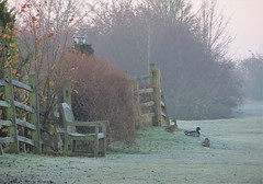 Chillin' Out .. (Julie Debra) Tags: ducks riverbank mist fog wooden fence countryside