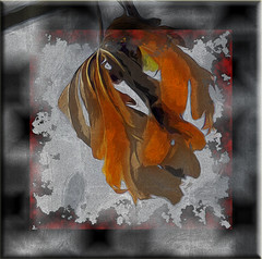 Hojas (seguicollar) Tags: art arte artedigital texturas virginiaseguí imagencreativa photomanipulation filterforge hojas naranja otoño