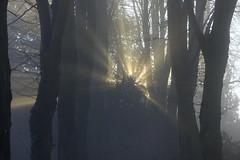 CarpeDiem (Tony Tooth) Tags: nikon d600 nikkor 105mm sunlight mist fog misty foggy trees churchyard carpediem rays leek staffs staffordshire