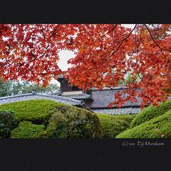 詩仙堂 (Eiji Murakami) Tags: japan kyoto autumn sony α7r2 a7r2 alpha7r2 voigtlander apolanther 日本 京都 秋 詩仙堂