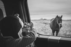 The Detour ... (vanessa violet) Tags: window horse hww wednesday thedetour vanessaviolet