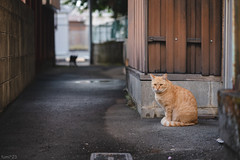 猫 (fumi*23) Tags: ilce7rm3 sony sel85f18 emount 85mm fe85mmf18 feline a7r3 animal alley katze cat chat neko gato street bokeh ねこ 猫 ソニー 路地