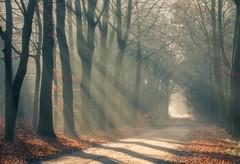 Autumn vibration (B. Idzenga) Tags: autumn vibration sun rays landscape photography trees sunlight forrest lane avenue colors this world