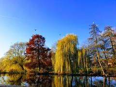 20191204ASDN-2 (Jeroen_de_Wijn) Tags: amsterdam nature noord
