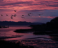 Dawn on the Pacific Flyway (Robin Wechsler) Tags: dawn sunrise weather california migration pelicans water sky clouds flight reflection