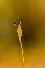 Perched (Gilles B. Photographe) Tags: france spring closeup insects insect animal iledefrance macro forêt forest wildlife outdoor animals printemps nature insectes insecte saintprix îledefrance