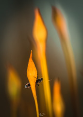 Pastel forest (Gilles B. Photographe) Tags: france closeup insects insect animal iledefrance macro forêt wildlife forest outdoor faune animals nature printemps insectes insecte saintprix îledefrance