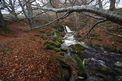 Photo of at the top of the leaf-strewn autumn woods hugging the many  falls at the lovely Falls of Acharn at Acharn, Perth & Kinross, Scotland.