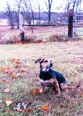 thanksgiving 19 fuji 200 (urtondavid) Tags: analogphotography analog availablelight analogue autumn buyfilmnotmegapixels colorfilm canon1n canon c41 cheapfilm daysgoneby explore explored epsonv800 35mm filmisfun filmisnotdead film filmphotography filmisalive filmisreal filmshooter family grain handdeveloped ibelieveinfilm ilovefilm ishootfilm fuji new naturallight oldschool oldies rollfilm fuji200 35mmf2