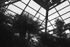 ---_00117 (@CorySchmitz) Tags: contax g2 black white film kodak trix
