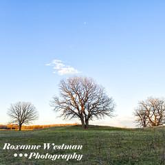 April_Sheyenne National Grasslands 1 (roxiesplacephotography) Tags: mapleton nd usa horizonscalendar2021