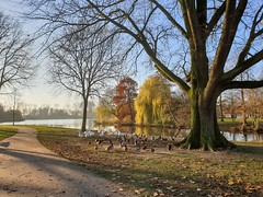 20191204ASDN-1 (Jeroen_de_Wijn) Tags: amsterdam nature noord