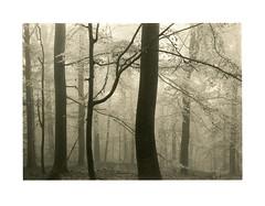 Fog Yellowish (Wolfgang Moersch) Tags: fp4 tanol hahnemühleplatinumrag tonedkallitype mt3variotoner
