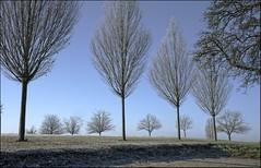 ...himmelblau... (shallowcreek) Tags: natur nature himmel sky blau blue landschaft landscape baum tree raureif frost austria