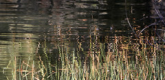 Quiet Undulations (studioferullo) Tags: abstract art beauty bright colorful colourful colors colours contrast dark detail edge light lines minimalism natural nopeople perspective pattern pretty scene southwest study texture tone world tucson arizona tanqueverde ranch water reflection waves