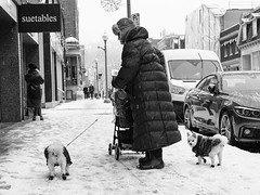 Walking the dogs (Papaye_verte) Tags: canada québec westmount chien dog snow neige winter hiver streetphotography