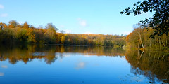 Slaugham Pond @ Autumn (Adam Swaine) Tags: autumn autumncolours autumnviews lakes trees waterside water sussex eastsussex beautiful seasons england english britain british uk ukcounties counties countryside adamswaine 2019 reflections
