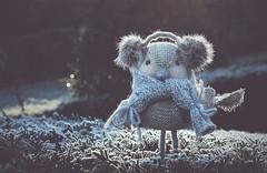 Bonjour l'hiver! (esterc1) Tags: frío cold pajarito invierno flickrfriday scarf frost