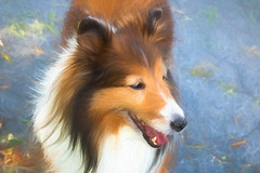 Lola (Millie Cruz (On and Off)) Tags: lola roughcollie dog animal digitalart painting topazstudio2 austin canoneosrebelt6i ef24105mmf4lisusm milliecruz