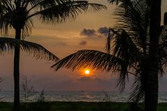 India - Arabian Sea - Sunset - 2430 (Peter Goll thx for +14.000.000 views) Tags: mararibeach d850 nikon meer sonnenuntergang nikkor28300 sea palme beach ocean strand india nikond850 palm indien sunset kerala mararikulam alappuzha arabiansea arabischesmeer