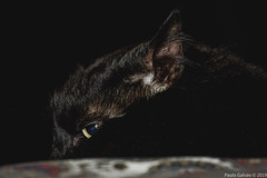 Bedtime (**PG**) Tags: pet pets feline blackcat cat